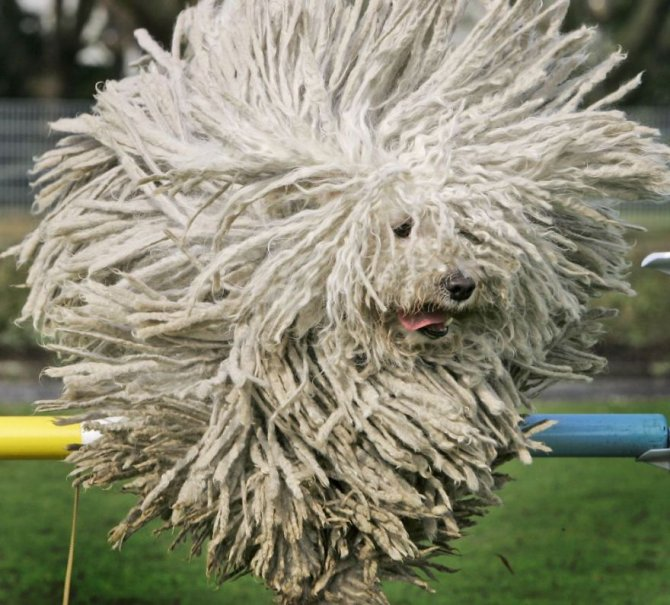 XX Animals That Need To Get A Haircut Real Bad4 880