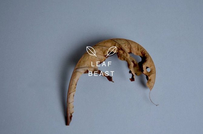 sculture foglie 6