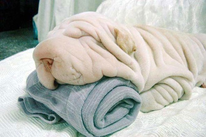 camouflage-animals-pets-funny-28__700
