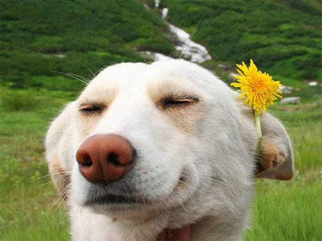 Gi animali più felici del mondo