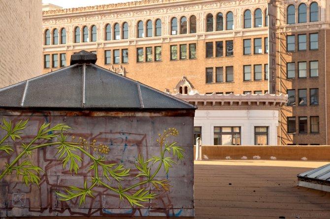 murales graffitti marijuana 6