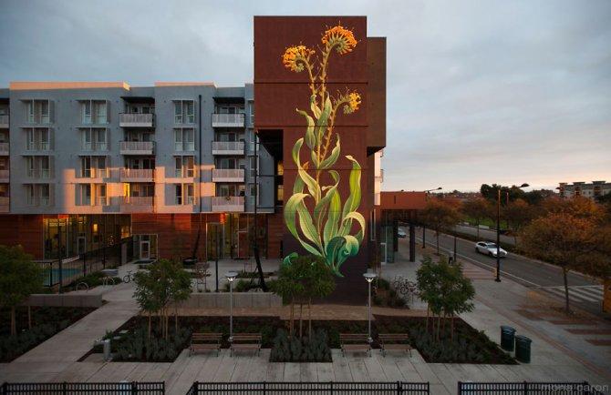murales graffitti marijuana 12