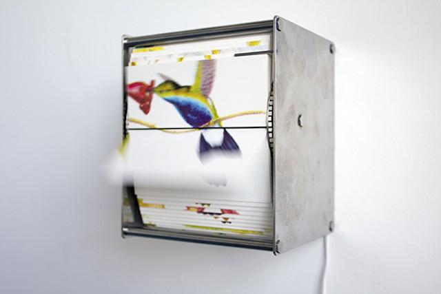 Queste scatole vi daranno l'illusione di avere splendidi uccellini dentro casa