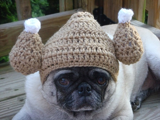 Sad-Pug-Looks-Even-Sadder-In-Ridiculous-Hats-2