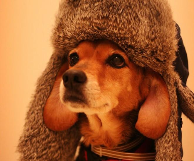 adventure-beagle-