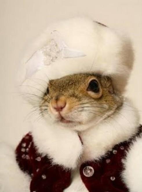 classy-squirl