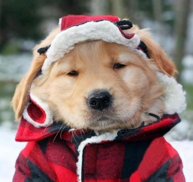 cold-puppy-554x525c