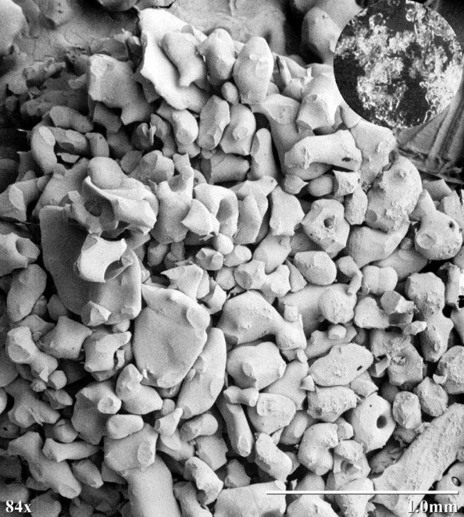 fiocchi neve microscopio elettronico 12