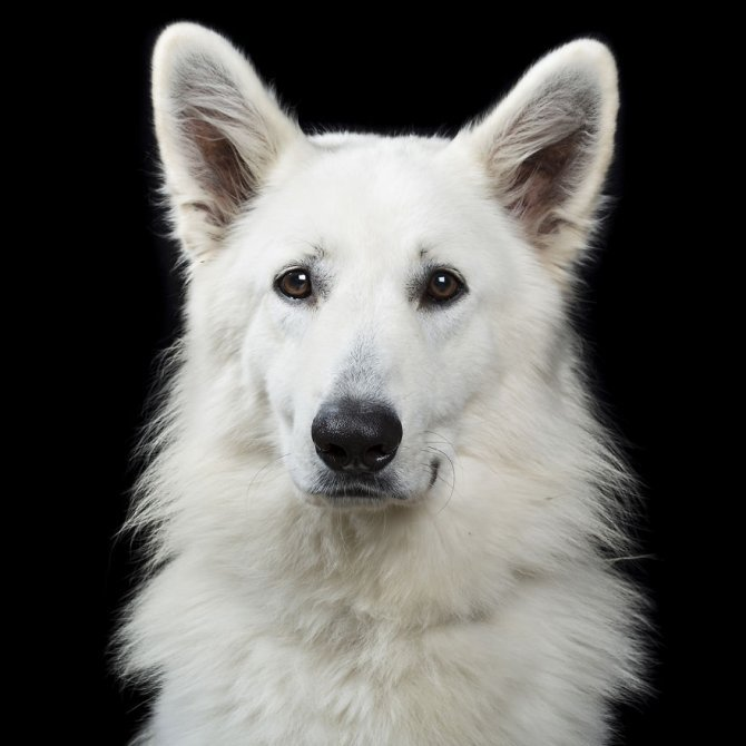Close Personal Portraits of Dogs Cats and Horses.2 880