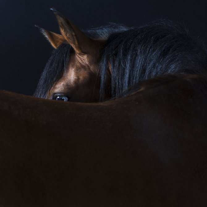 Close Personal Portraits of Dogs Cats and Horses.4 880