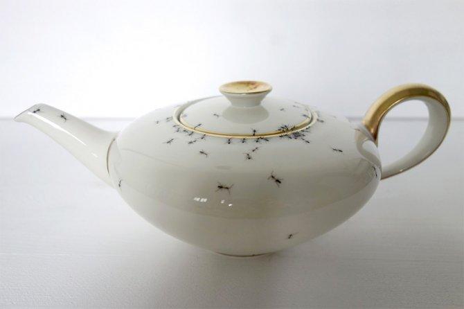 ants 4