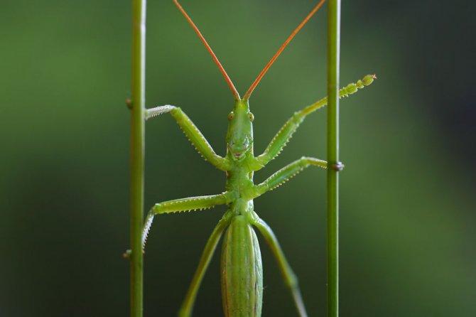 insetti 3
