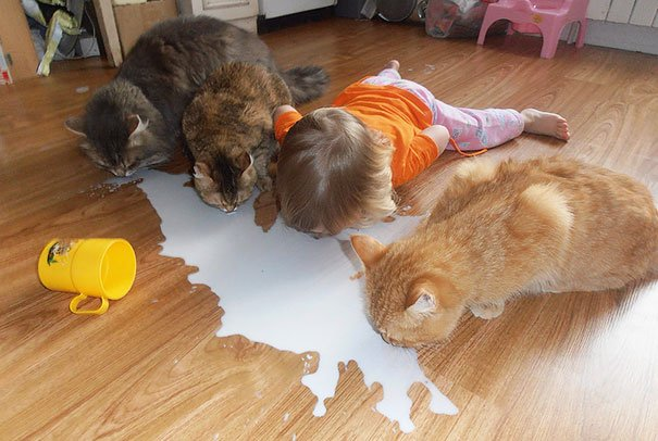 kids act like animals cats 605