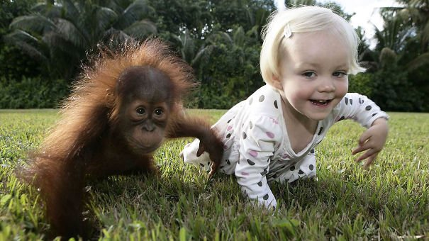 kids act like animals like orangutan 605