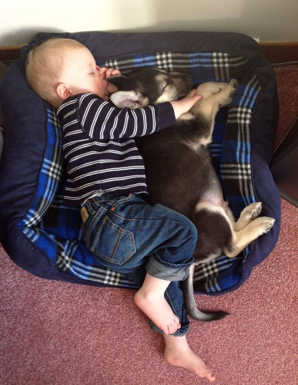kids act like animals sleeping with puppy 605