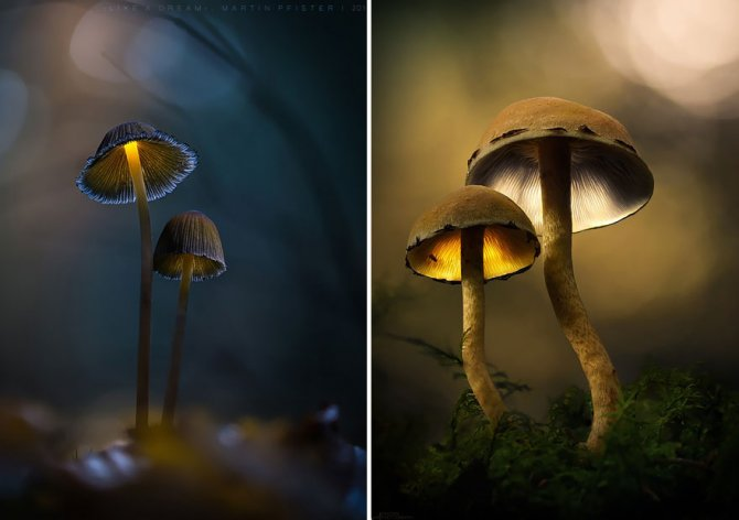 mushrooms martin pfister 1