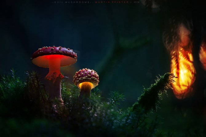 mushrooms martin pfister 13