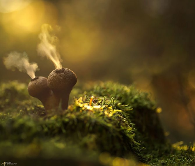 mushrooms martin pfister 3