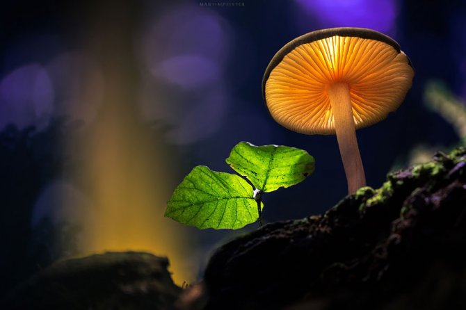 mushrooms martin pfister 5