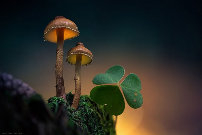 mushrooms martin pfister 8