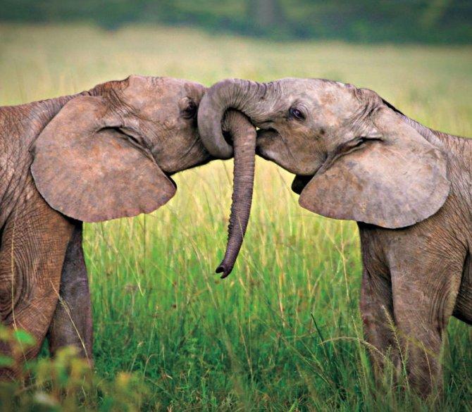 animal-couples-elephants__880