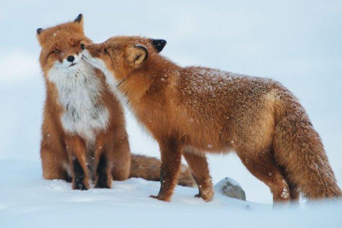 animals love couple 10 880