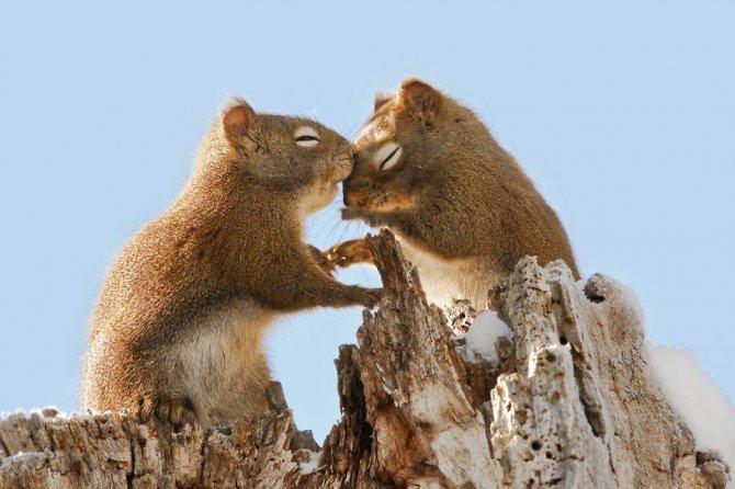 animals love couple 1 880