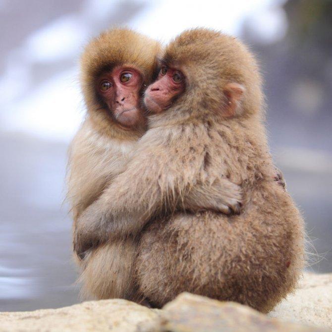 animals love couple 2 880