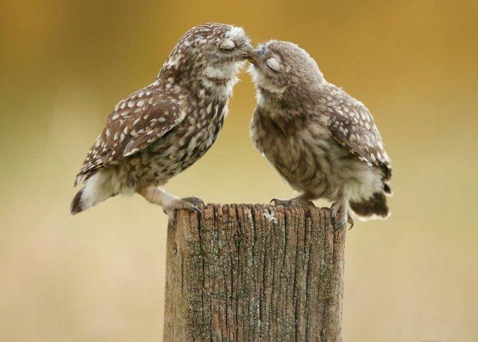 animals love couple 8 880