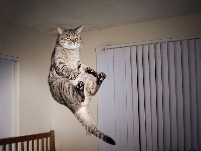 flying cat1