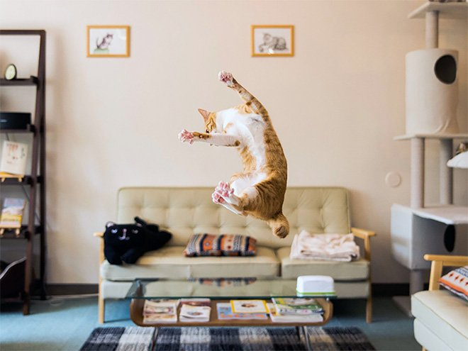 flying cat13