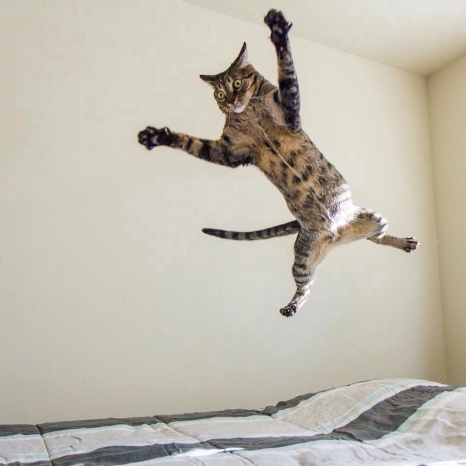 flying cat3