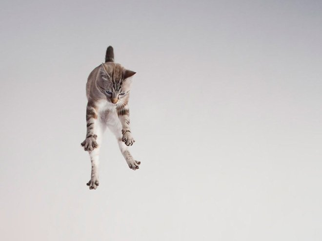 flying cat5