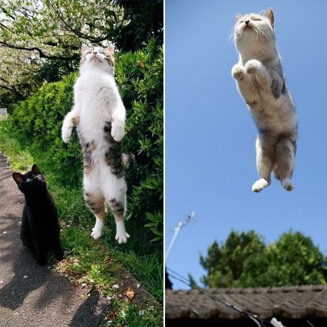 flying cat7