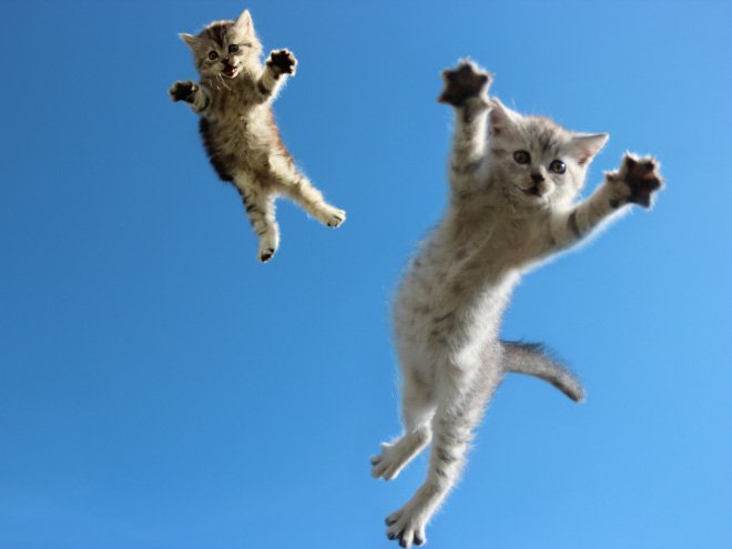 flying cat8