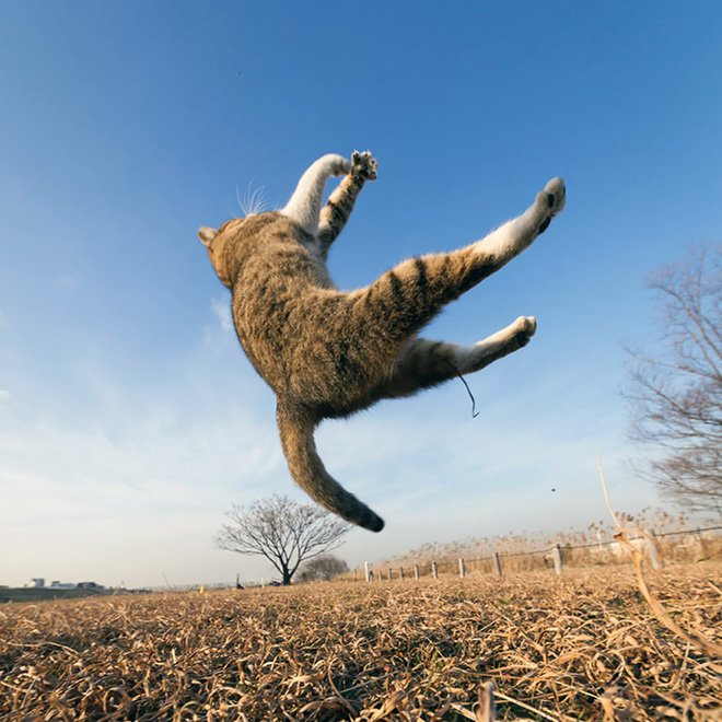 flying cat9