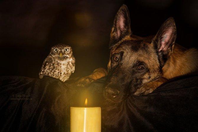 ingo else dog owl friendship tanja brandt 1