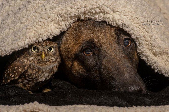 ingo else dog owl friendship tanja brandt 10