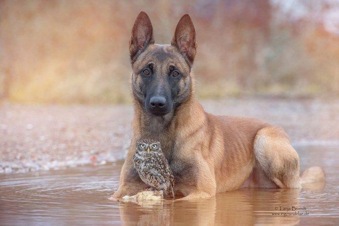 ingo else dog owl friendship tanja brandt 11