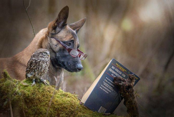 ingo else dog owl friendship tanja brandt 12