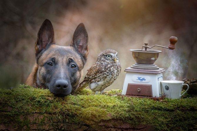 ingo else dog owl friendship tanja brandt 13