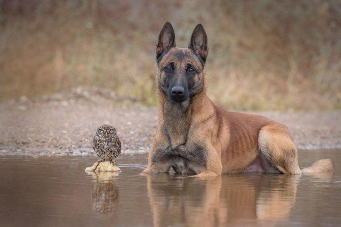 ingo else dog owl friendship tanja brandt 14