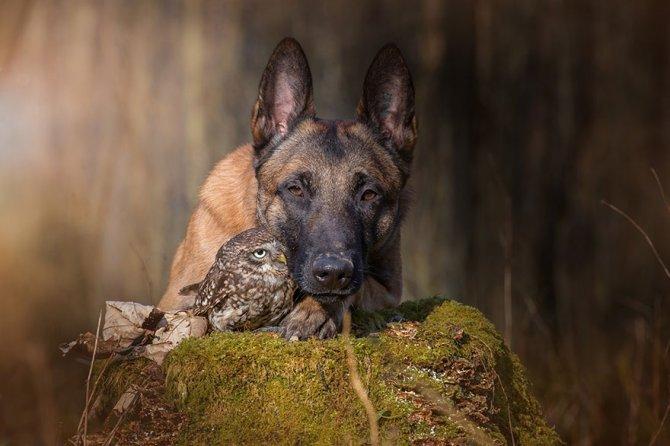 ingo else dog owl friendship tanja brandt 2