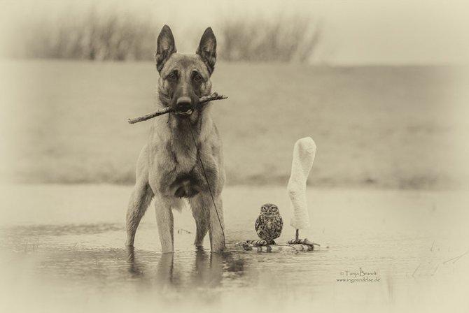 ingo else dog owl friendship tanja brandt 3