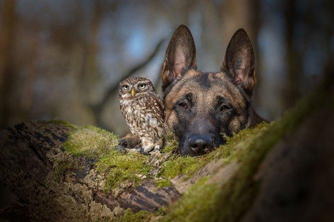ingo else dog owl friendship tanja brandt 4