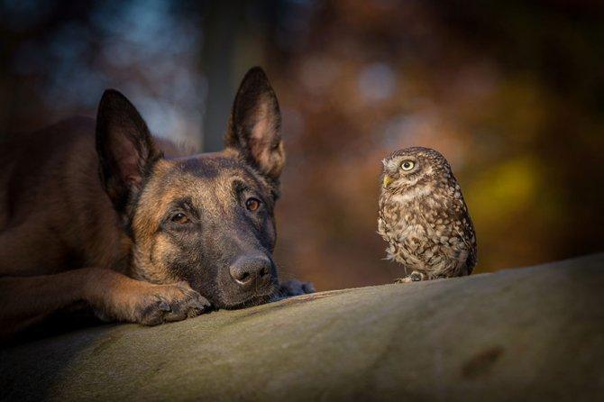 ingo else dog owl friendship tanja brandt 6