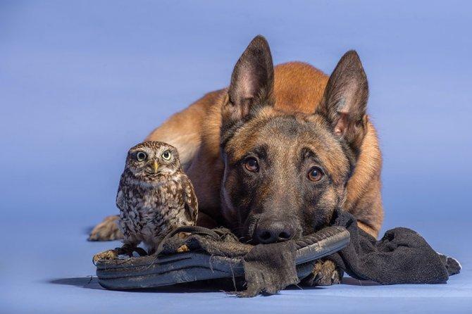 ingo else dog owl friendship tanja brandt 7
