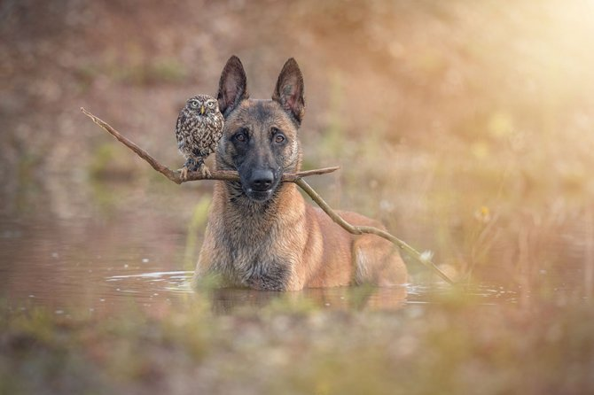 ingo else dog owl friendship tanja brandt 8