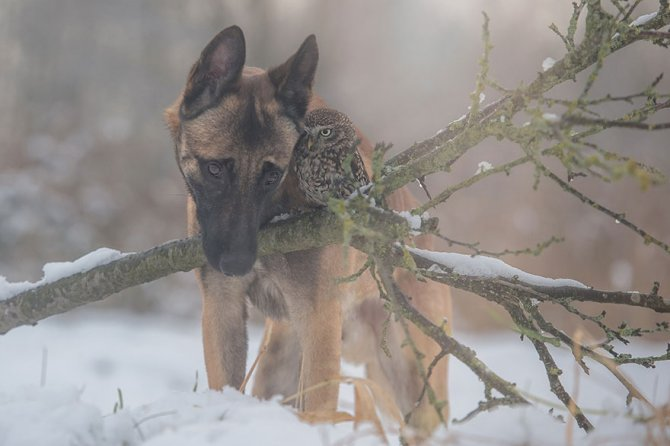 ingo else dog owl friendship tanja brandt 9