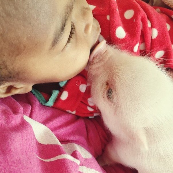 little girl piglet friendship libby and pearl 22 605x605